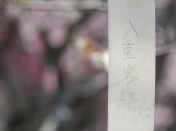 IMGP2284_R.JPG