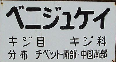 s-_K528270.jpg